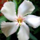 Edited Flower by Jackson  McCarthy