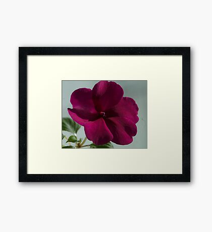 Flower in the Window Framed Print