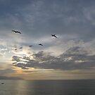 Pelicans high in the Sky in a Line - Pelícanos en Linea by PtoVallartaMex
