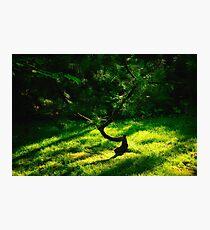 Yin and Yang Photographic Print