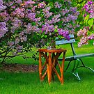 Come Sit With Me by Linda Miller Gesualdo