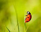 Ladybird by Svetlana Sewell