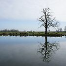 River Mirror Image by Phill Sacre