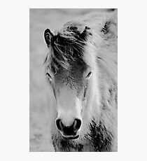 Wild Foal Photographic Print