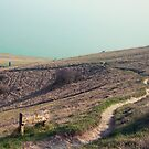 Erosion Control Footpath by Patrick Metzdorf