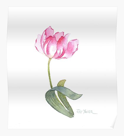 Pink Tulip Watercolor Poster