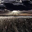 Reeds Of Gold @ Fleet Pond by martin bullimore