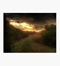 Grass Path Photographic Print