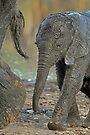 Come along junior by Explorations Africa Dan MacKenzie