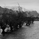 Line of trees, Glenorchy by gematrium
