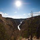Grand canyon by Matthew Tyrrell