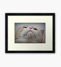 Feline Features Framed Print