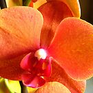 New orchid by Maria1606