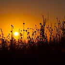 Dawn by Rudi Venter