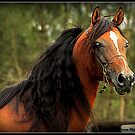Arabian Stallion by SylanPhotos