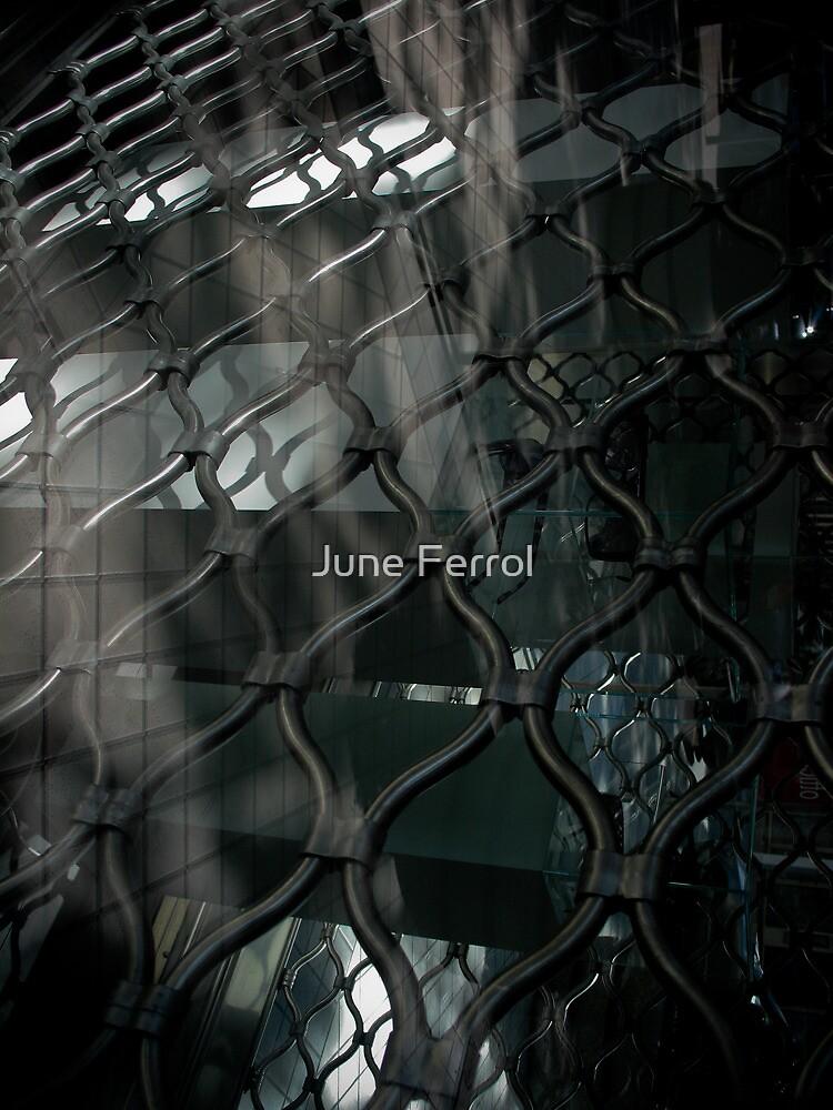 DIVE IN by June Ferrol