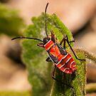 Seen in my garden #8 by Rudi Venter