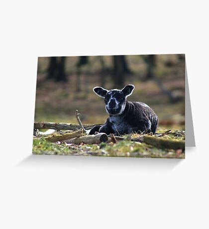 Little Black Sheep Greeting Card