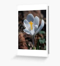 The Day of the Crocus Greeting Card