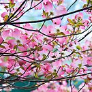Spring's Call to the Dogwood Tree by Jay Reed