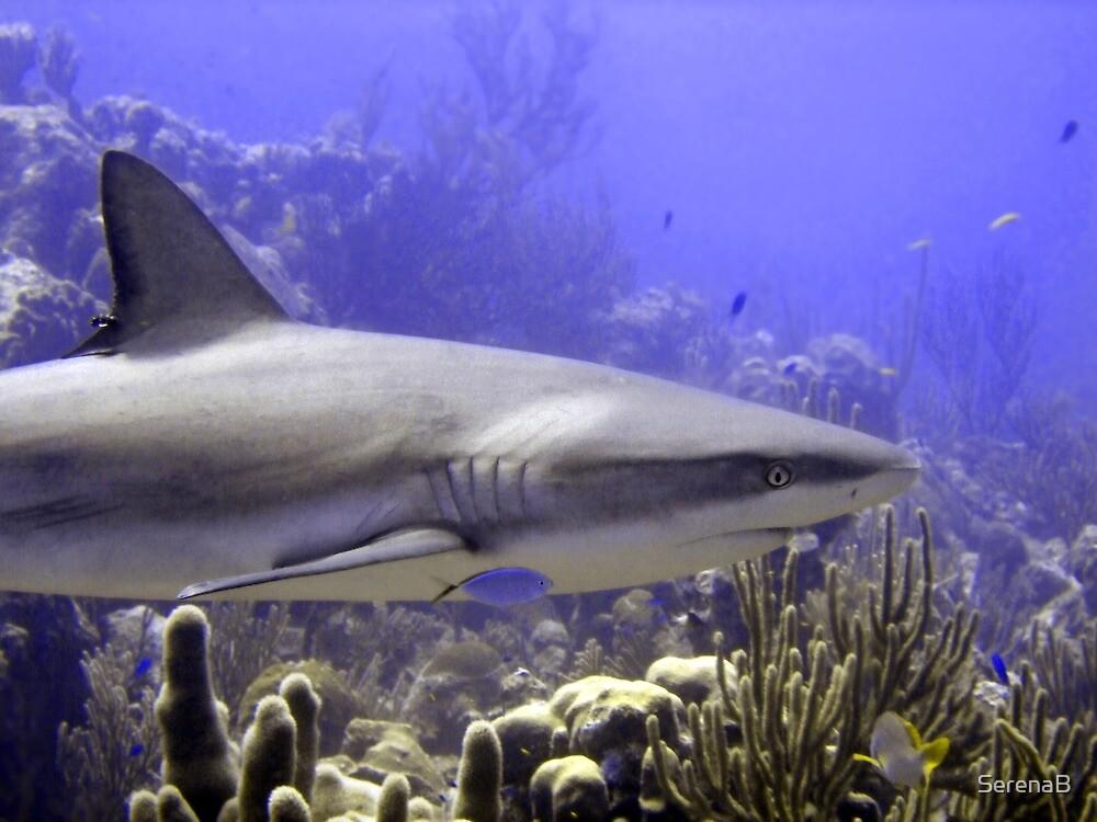 Shark Swimming Past by SerenaB