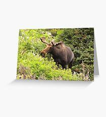 Bull Moose Side Shot  Greeting Card