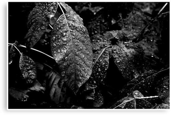"""Botanical Drops #3"" by Jaime Hernandez"