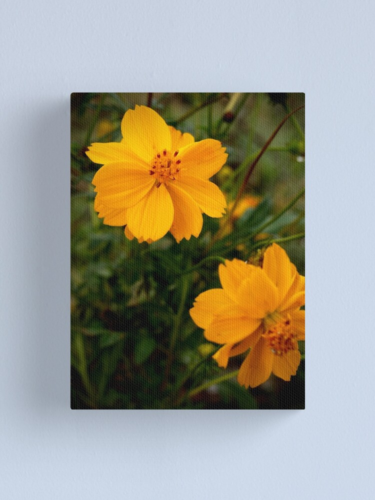 Alternate view of Golden Coreopsis from A Gardener's Notebook Canvas Print