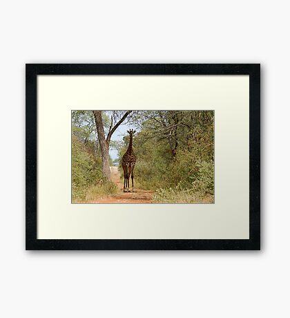 CAN I HELP, ARE YOU LOST? - GIRAFFE – Giraffa camelopardalis Framed Print