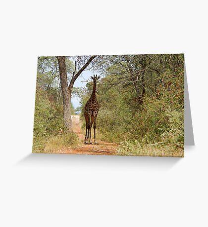 CAN I HELP, ARE YOU LOST? - GIRAFFE – Giraffa camelopardalis Greeting Card