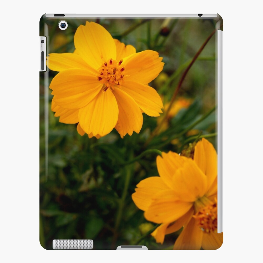 Golden Coreopsis iPad Case & Skin