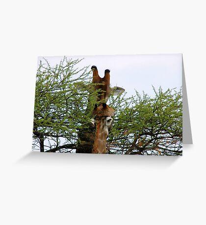 ONE SMALL KISS? - GIRAFFE – Giraffa camelopardalis (KAMEELPERD) Greeting Card