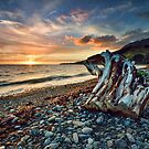 Coromandel Sunset Stump by Ken Wright