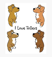 I Love Tollers! Photographic Print