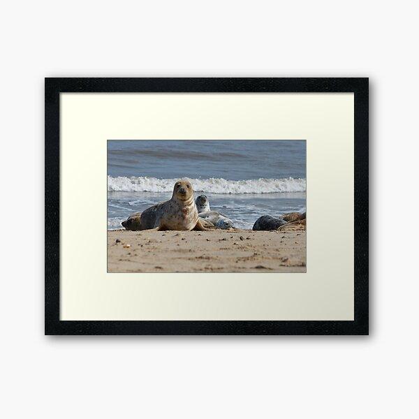 Horsey Seal Framed Art Print