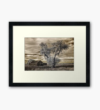 Out the back and forgotten Framed Print