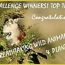 CHALLENGE BANNER -BREATH TAKING WILD ANIMALS & PLANTS by Magriet Meintjes