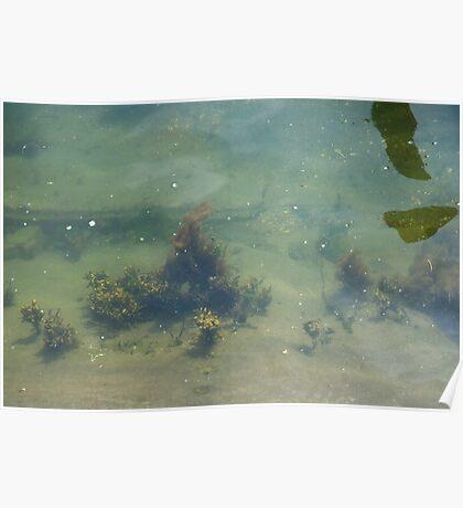 Underwwater Garden Poster