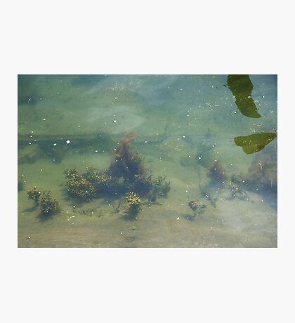 Underwwater Garden Photographic Print