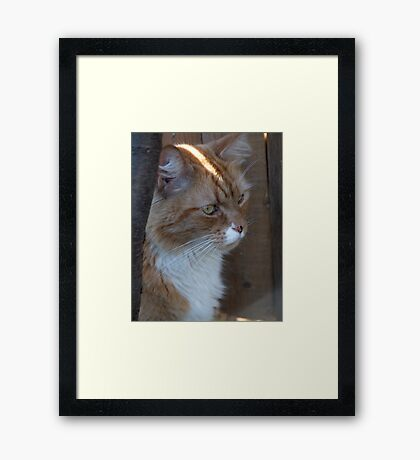 Not to be Distracted Framed Print
