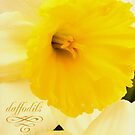 daffodils 2012 by thinkingoutloud