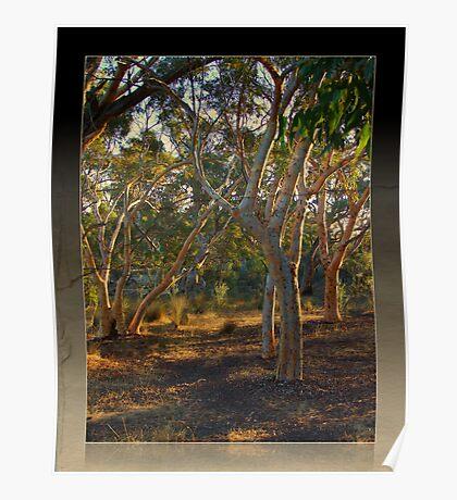 Afternoon Light - Bruce Rock, Western Australia Poster