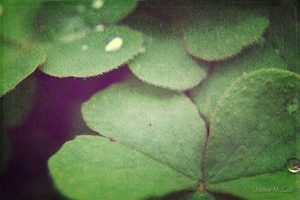 clover 2 by Jamie McCall