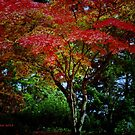 Nature's bright lights of fall by Rainydayphotos