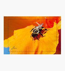 Pollen Fuel Photographic Print