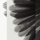 Feather by SHOT