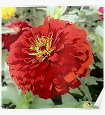 Flowers in Bloom - Red Zinnia Poster