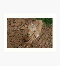 Splendaview Goat Art Print