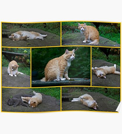 Marvelous Max The Marmalade Cat #2 Poster