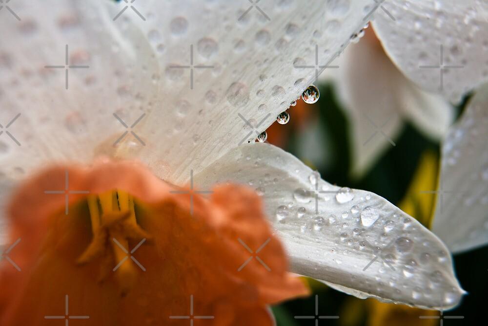 In Bloom 3396 by Zohar Lindenbaum